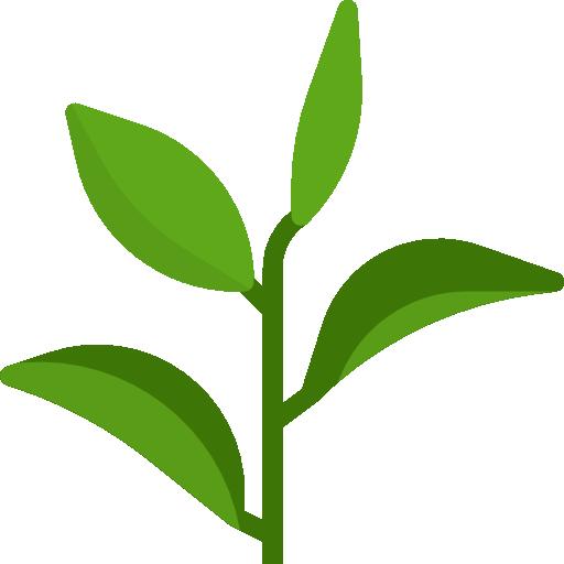 grüner tee  kostenlos Icon