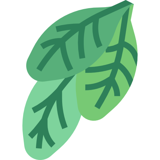 Spinach  free icon