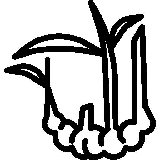 Ginger  free icon