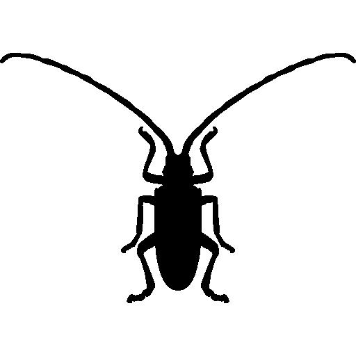 곰팡이 딱정벌레 곤충 모양  무료 아이콘