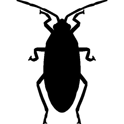 Roach  free icon