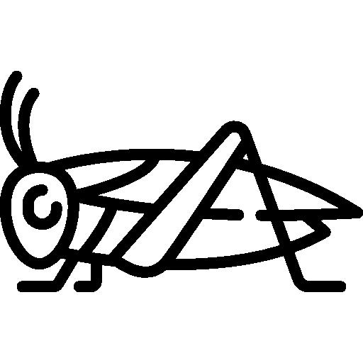 Cricket  free icon