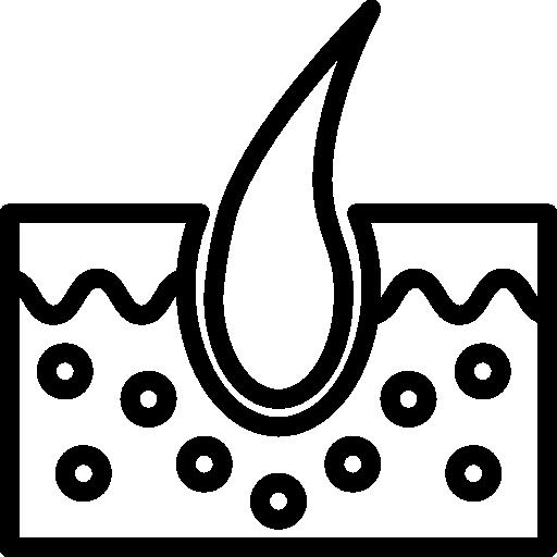 Epidermis  free icon