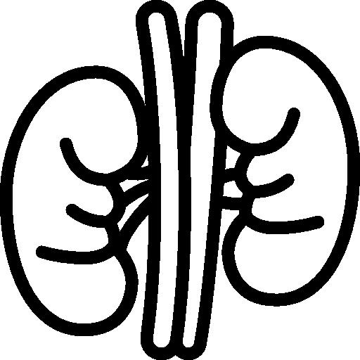 Kidney  free icon
