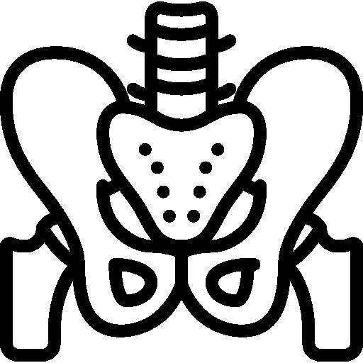 Pelvis  free icon